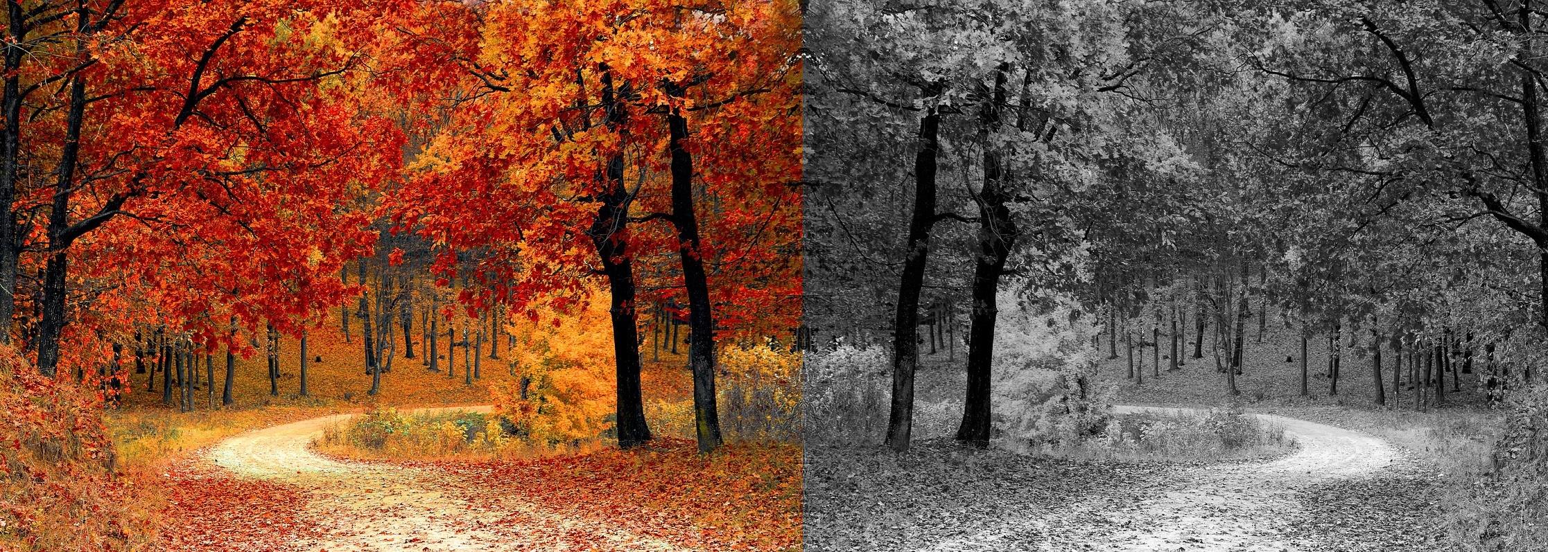 Herbst_Spiegelweg2.jpg